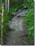 Weg durch Wald